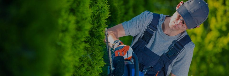 Pristine Care For All Your Garden Landscaping Needs
