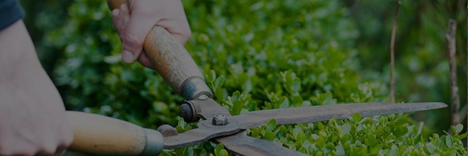 We Have Been Providing Landscaping Services Since 2005