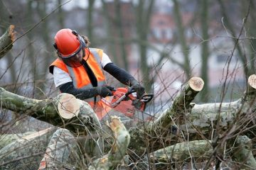 Garden Care & Tree Removal